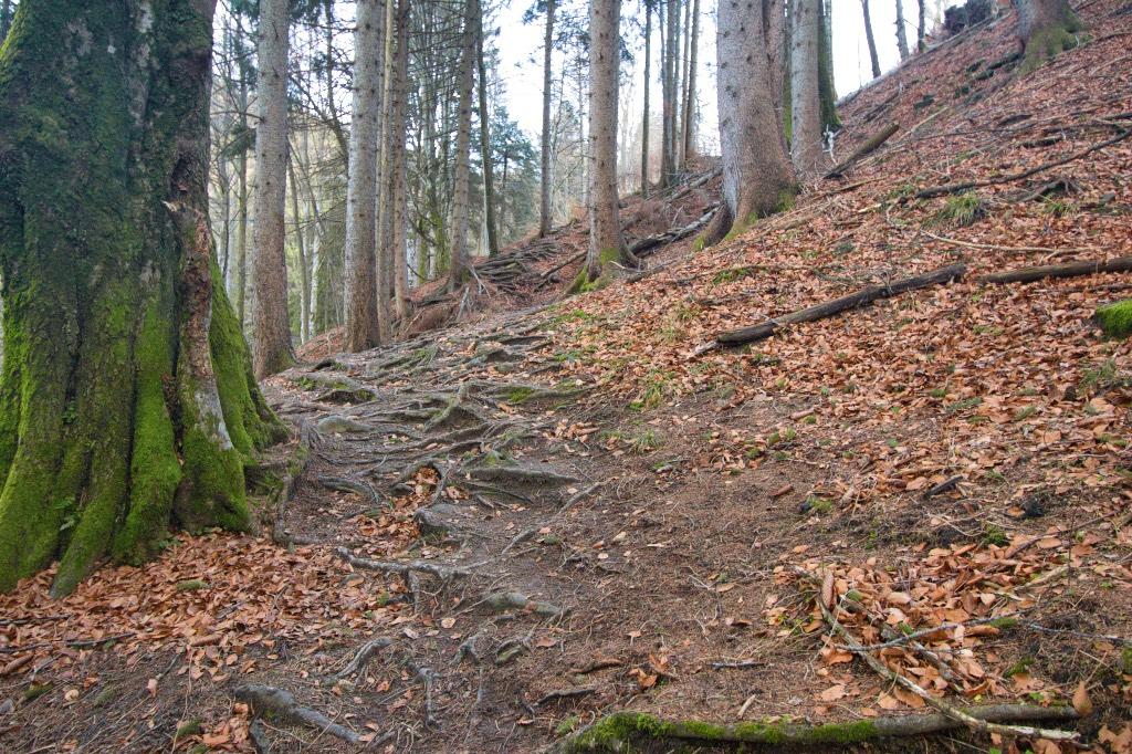 Kulturenweg Buchenberg