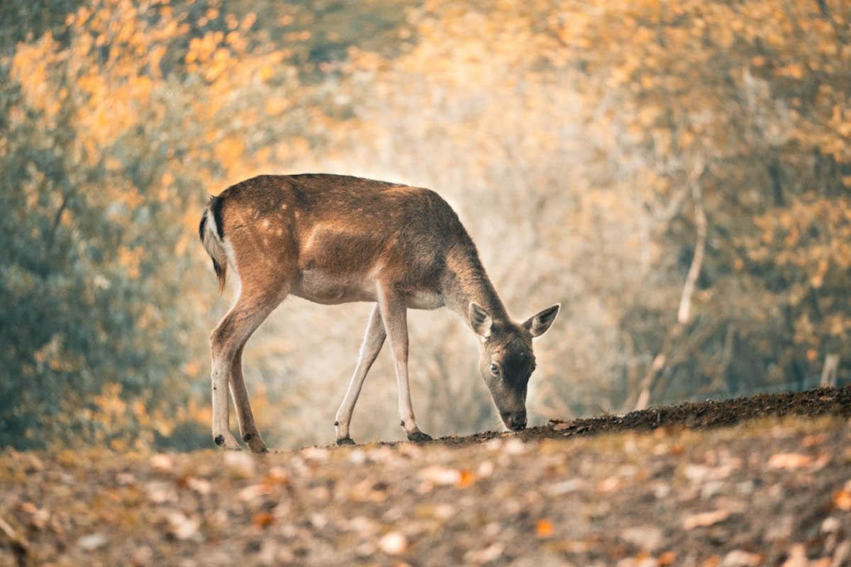 Wäller Tour Buchfinkenland im Westerwald - OutdoorGlück